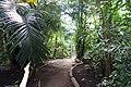 Essen Grugapark Botanischer Garten Pflanzenschauhäuser 04.jpg