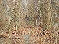 Essex west trail SW jeh.jpg