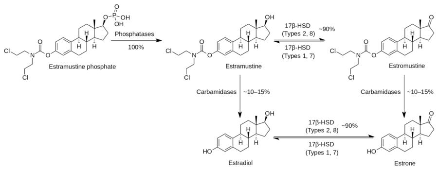 Estramustine Phosphate Wikipedia