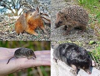 Eulipotyphla Order of mammals