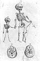 F. Platter, De corporis humani structura et usu... Wellcome L0025475.jpg