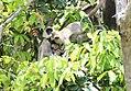 FLora and fauna of Chinnar WLS Kerala (64).jpg