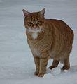 Facing red cat.JPG