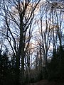 Fageda de Bonbac (desembre 2010) - panoramio.jpg