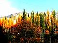Fall in Hunza-basraa-6.jpg
