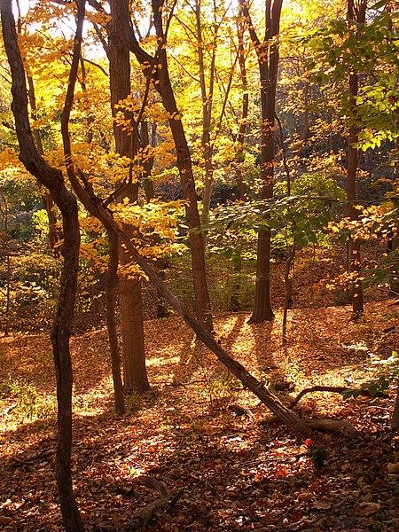 File:Fall leaves in Frick Park 01.jpg