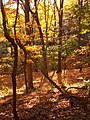 Fall leaves in Frick Park 01.jpg