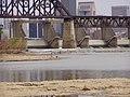 Falls of the Ohio P8130012.jpg