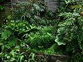 Far, far too many plants - Flickr - peganum.jpg