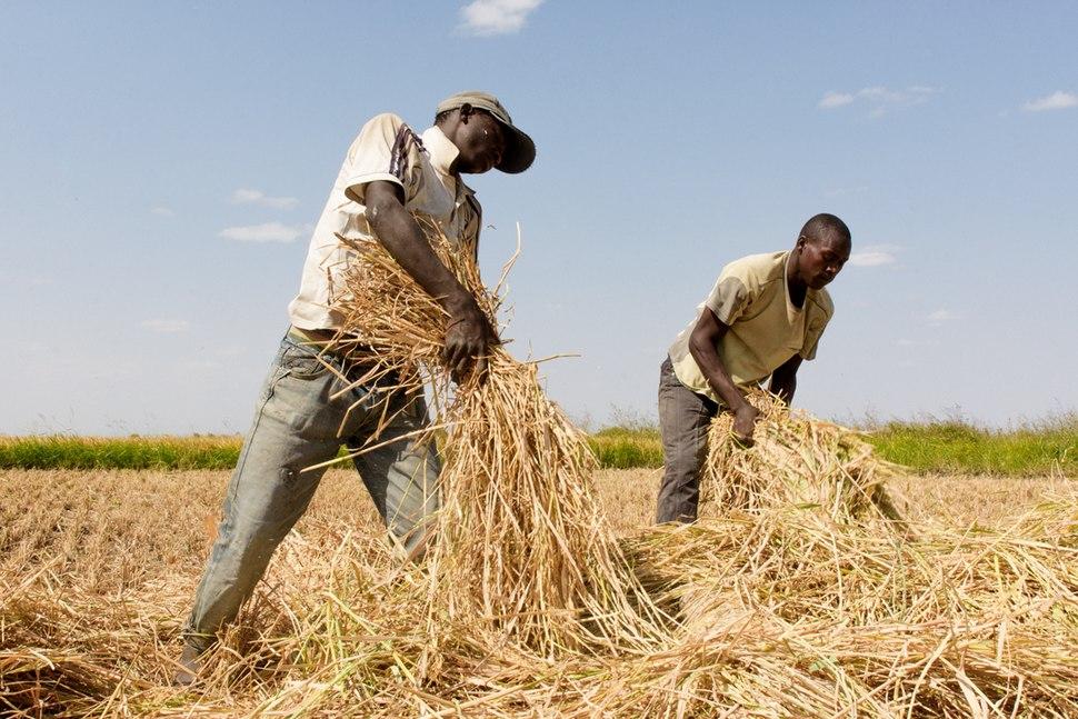 Farmers in Igunga, Tanzania