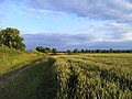 Farmland, Stanton St John - geograph.org.uk - 1589598.jpg