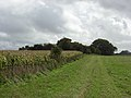 Farmland and copse, Mildenhall Warren - geograph.org.uk - 265641.jpg