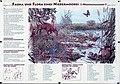 Fauna und Flora eines Niedermoores.jpg