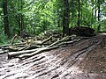 Felled timber on The Penyard - geograph.org.uk - 508777.jpg