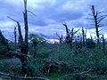Felled trees from 2011 tornado; Brimfield, MA.jpg