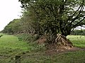 Field boundary, Patchacott Cross - geograph.org.uk - 487053.jpg