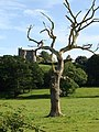 Field with sculpture-tree and the castle, Llansteffan - geograph.org.uk - 1432674.jpg