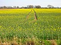 Fields near Cliftonville Farm - geograph.org.uk - 394317.jpg
