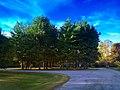 Fieldstone Ave. Trees - panoramio.jpg