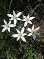 Five garden flowers (8981599730).jpg