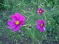 Fleurs 5.jpg