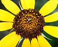 Flickr - ggallice - Flower (4).jpg