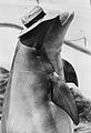 Flipper 1969.JPG