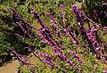 Flores en el jardín botánico de la UNAM.JPG