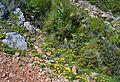 Flors i margalló prop de la cova Tallada.JPG