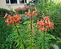 Flourishing flower garden.jpg