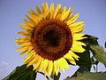 Flower-Pict2179.jpg
