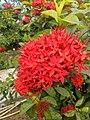 Flower.17.jpg