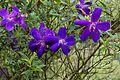 Flower 1264.jpg
