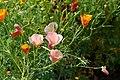 Flower 219 (34651544074).jpg