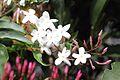 Flower 9525 (9498678573) (3).jpg