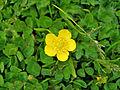 Flower Rex 18.jpg
