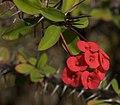 Flowers (5068187474).jpg