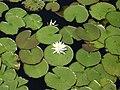 Flowers - panoramio (8).jpg