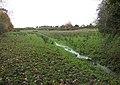 Footpath following stream - geograph.org.uk - 1042729.jpg