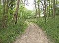 Footpath in Honeycombe Wood - geograph.org.uk - 428901.jpg