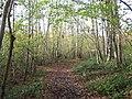 Footpath in Paraker Wood - geograph.org.uk - 2170535.jpg