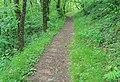 Forêt des Palanges (1).jpg