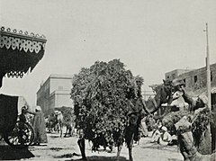 Forage Camels Near the Picturesque Fountain Given by the Society for Prevention of Cruelty to Animals in the Square in Front of the Governorat at Cairo. (1911) - TIMEA.jpg