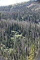 Forest affected by spruce beetle activity in the late 1990s on East Entrance Road. (889b1685-a7ba-427e-8225-8c8005353710).jpg