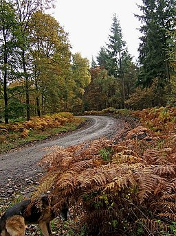 Forestry road in Wyre Forest - geograph.org.uk - 1557153