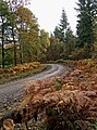 Forestry road in Wyre Forest - geograph.org.uk - 1557153.jpg