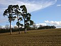 Four trees in a field - geograph.org.uk - 1726671.jpg