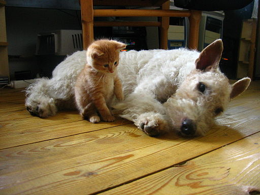 Dogs Are Better Than Cats Kitten With Dog