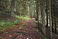 France - trail 2.jpg