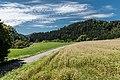 Frauenstein Pfannhof Spitz Buchweizenfeld 14082017 0345.jpg
